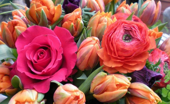 Frühling-Bender-Blumen-kaufen-Neuss