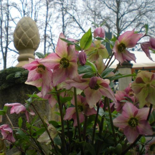 Pflanzen-kaufen-bei-Blumen-Bender